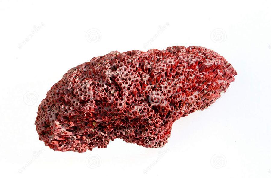 coral-rojo-de-la-gran-barrera-de-coral-aislado-en-blanco-38062273 copy